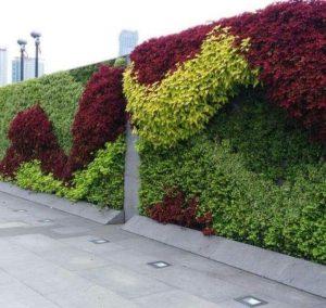 Taman fertikal garden